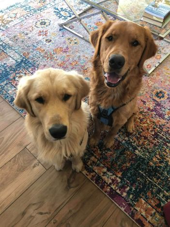 Leo & Loki 2