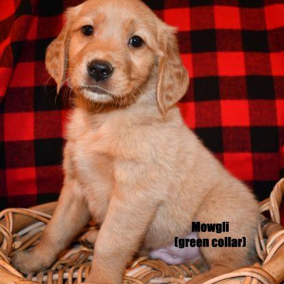 Mowgli2